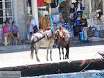 Eiland Hydra Griekenland - De Griekse Gids Foto 74