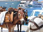 Eiland Hydra Griekenland - De Griekse Gids Foto 75